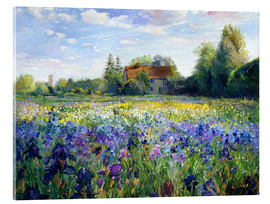 Quadro em acrílico  Field of flowers in the sunset - Timothy Easton