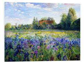 Quadro em PVC  Field of flowers in the sunset - Timothy Easton