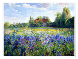 Póster Premium  Field of flowers in the sunset - Timothy Easton
