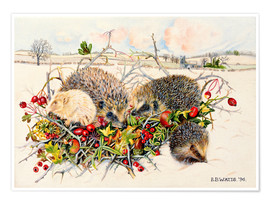 Póster Premium  Hedgehogs in Hedgerow Basket - E.B. Watts