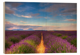 Quadro de madeira  Fields of Lavender, Provence - Circumnavigation