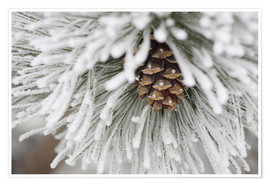 Póster Premium Pinecone in frost