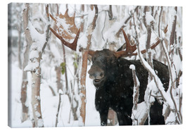 Quadro em tela  Elk sniffing in a winter forest - Philippe Henry