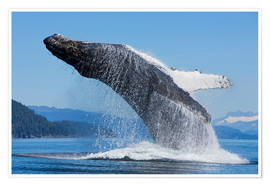 Póster Premium Jumping Humpback Whale