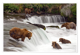 Póster Premium Grizzly in Katmai National Park