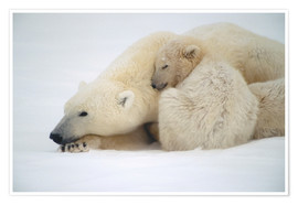 Póster Premium  Polar bear mother with cub - Kenneth Whitten