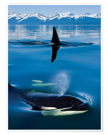 Póster Premium Whales in front of the Range Mountains