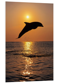 Quadro em PVC  Dolphin in the sunset - Tom Soucek