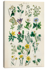 Quadro em tela  Wildflowers - Sowerby Collection