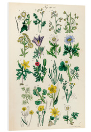 Quadro em PVC  Wildflowers - Sowerby Collection