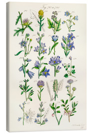 Quadro em tela  Wildflowers, Sowerby - Sowerby Collection