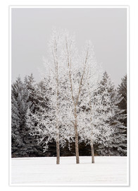 Póster Premium Frost On Trees
