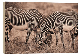 Quadro de madeira  Two Zebras Grazing Together - David DuChemin