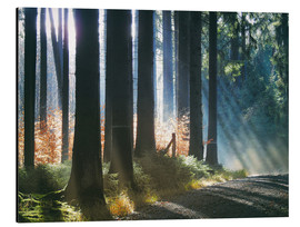 Quadro em alumínio  Morning Light in the Forrest - Martina Cross