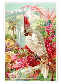 Póster Premium  Cocktail Cockatoo - Advertising Collection