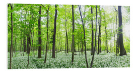 Quadro em PVC  A forest in springtime with wild garlic - Benjamin Butschell