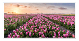 Póster Premium tulips fields holland