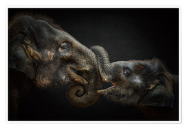 Póster Premium Tenderness Asian Elephants