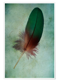 Póster Premium  Green feather - Jaroslaw Blaminsky