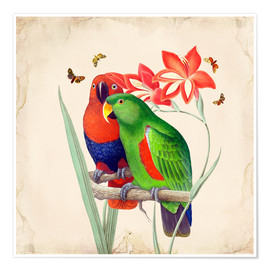 Póster Premium Oh My Parrot I