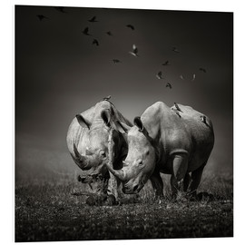 Quadro em PVC  Two Rhinoceros with Birds - Johan Swanepoel