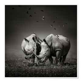 Póster Premium  Two Rhinoceros with Birds - Johan Swanepoel
