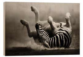 Quadro de madeira  Zebra rolling upside down on dusty desert sand - Johan Swanepoel