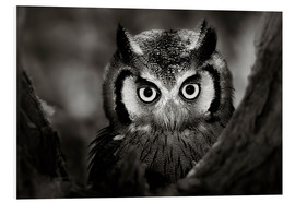 Quadro em PVC  White-faced Owl perched in a tree - Johan Swanepoel