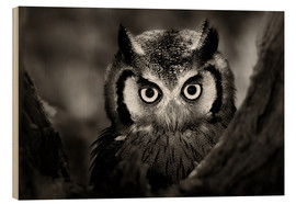 Quadro de madeira  White-faced Owl perched in a tree - Johan Swanepoel