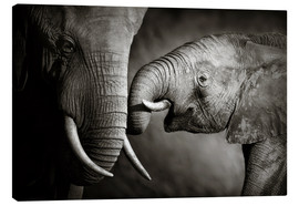 Quadro em tela  Baby elephant interacting with Mother - Johan Swanepoel