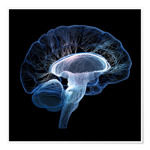 Póster Premium Human Brain illustrated with network of nerves