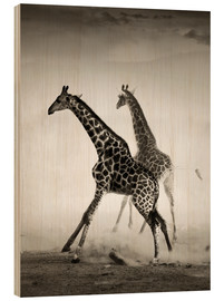Quadro de madeira  Giraffes running in the dust - Johan Swanepoel