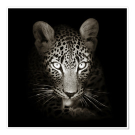 Póster Premium  Leopard portrait licking it's paw - Johan Swanepoel