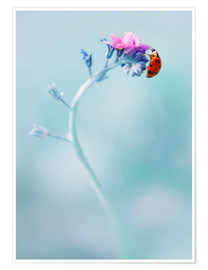 Póster Premium Ladybug on forget me not flower