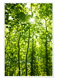 Póster Premium Green forest in sunlight