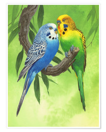 Póster Premium  Budgies on Green Background - John Francis