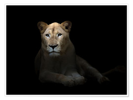 Póster Premium  White Lioness in the dark night