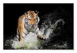 Póster Premium  Tiger Makes the water
