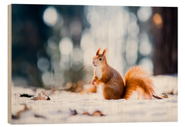 Quadro de madeira  Squirrel looking for its nut
