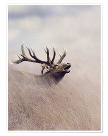 Póster Premium  The call of the stag