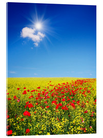 Quadro em acrílico  Sunny landscape with flowers in a field