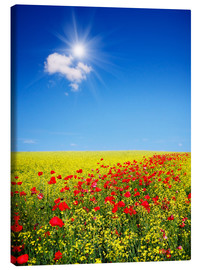 Quadro em tela  Sunny landscape with flowers in a field