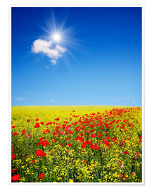 Póster Premium  Sunny landscape with flowers in a field