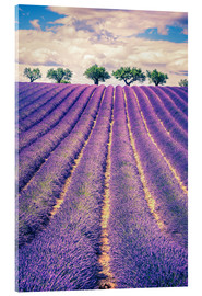 Quadro em acrílico  Lavender field with trees in Provence, France
