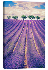 Quadro em tela  Lavender field with trees in Provence, France
