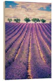 Quadro de madeira  Lavender field with trees in Provence, France