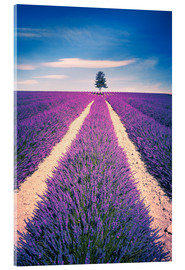 Quadro em acrílico  Lavender field with tree in Provence, France