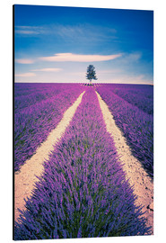 Quadro em alumínio  Lavender field with tree in Provence, France