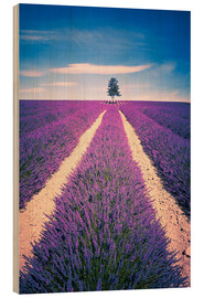 Quadro de madeira  Lavender field with tree in Provence, France