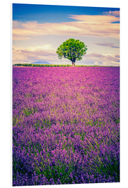 Quadro em PVC  Lavender field with tree in Provence, France